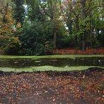 Foto de Bushy Park