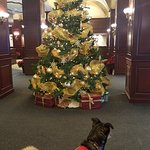 Front Lobby , my dog was visiting with us.