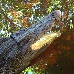 A crocodile sunning herelf in the water