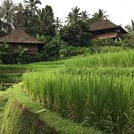 Bali Eco Stay Bungalows-billede