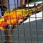 Al Azizia Birds Kingdom