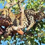 Zdjęcie Londolozi Pioneer Camp