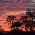Londolozi Pioneer Camp Photo