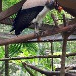 Photo de Macaw Mountain Bird Park & Nature Reserve