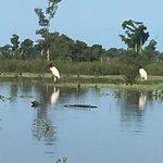 Jabir storks on boat trip