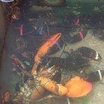 Photo of Menemsha Fish Market