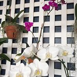 A wall of beautiful orchids in the pool area!