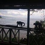 Monos..bring bananas