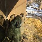 Seneca Park Zoo - baboons