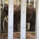 Seneca Park Zoo - large elephant