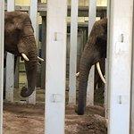 Seneca Park Zoo - elephants saying hello to each other