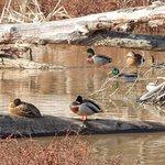 Ducks place