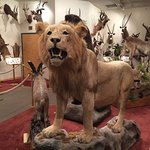 Natural History Museum - Western Wyoming Community College Foto
