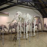 Elephant museum at Letaba