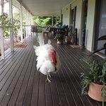 The resident turkey