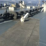 "My pet rabbit ""Narvik"" plays on the foredeck....."