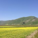 Periodo della fioritura delle lenticchie, prima del sisma del 2016..spero di tornare col paese r