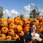 pre picked pumpkins