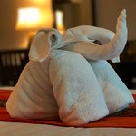 Welcoming Elephant Towel!
