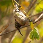 Zahlreiche Vögel besuchen das TOP-Hotel in Wilderness