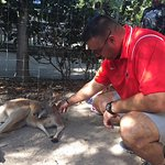 Petting the Kangaroos