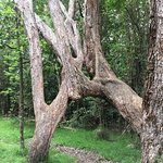 "Natural ""Tree Archway"" on the nature trail."