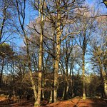 New Forest Foto