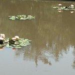 Like Monet's garden . . .