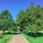 An alley of fruit trees through the golf course on a morning walk