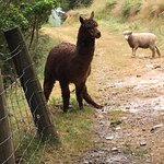 Lochmara Lodge - Wildlife Recovery and Arts Centre Foto