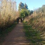 Photo of Parco Regionale Migliarino San Rossore Massaciuccoli