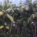 palms clustered around the beach