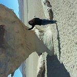 Arbol de Piedra Foto