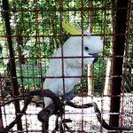 Photo of Cebu Zoo
