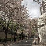 Street behind the hotel during sakura