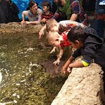 Kids touching fishes