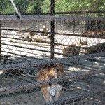 Вот такие вольеры в зоопарке( Животных почти не видно