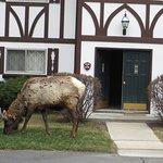 Photo de Fawn Valley Inn