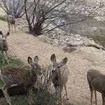 Small Deer come to the door