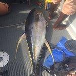 55KG Yellowfin Tuna