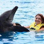 una experiencia increible poderlos tocar y nadar con ellos