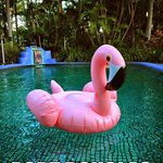 Pink Flamingo Picture