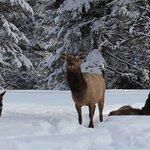 Foto di Triple Creek Ranch