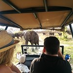 Photo de Elephant's Eye, Hwange