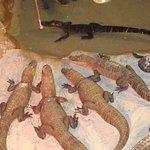gator pit