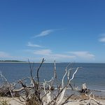 driftwood down by the shore ...beautiful scenery