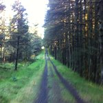 Glenariff forest only a short drive from the village