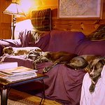 Photo de Barkwells, The Dog Lovers' Vacation Retreat