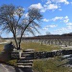 Part of the vinyards