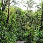 Reserva Bosque Nuboso Santa Elena Foto